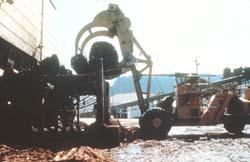 Carrier truck moves logs onto log deck.