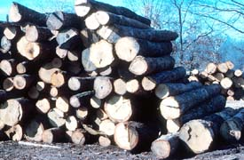 Unstable log pile creating an unsafe work area.