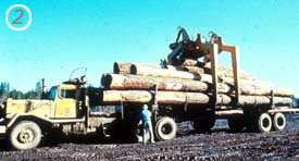 With the unloader holding the logs in place, the truck driver releases the load binders.