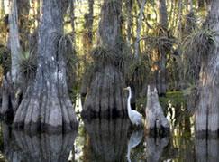 bird in the wetlands