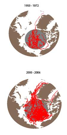Data from Arctic buoys reporting surface air temperatures and sea level pressure were used to create sparse storm  tracks from 1950 to 1972.  Buoys also captured the data used to create the more abundant storm tracks from 2000 to 2006.