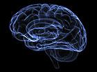 The Human Brain. Copyright iStock International Inc.
