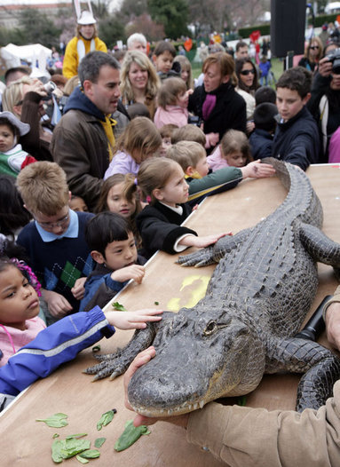 Kids reach out to touch an alligator at the White House Easter Egg Roll Monday, Mar. 24, 2008, on the South Lawn of the White House. White House photo by Chris Greenberg