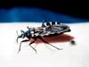 Este podcast tiene el propósito de informar a los profesionales de la salud sobre la enfermedad de Chagas, su diagnóstico y tratamiento, así como orientar en la identificación de pacientes infectados.
