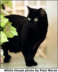 Photograph of India, a black cat, next to a plant on a table. White House photo by Paul Morse