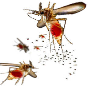 fictional mosquito swarm, click to see actual photo