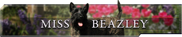 Miss Beazley Front Page