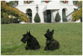 Barney and Miss Beazley relax on the South Lawn in front of a holiday decorated White House, Tuesday, Nov. 28, 2006.