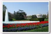 Link to White House Gardens – Spring Photo Essays