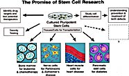 The Promise of Stem Cell Research I