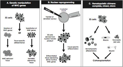 Genetic Manipulation of Human Embryonic Stem Cells