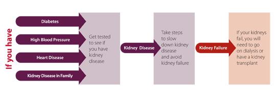 Diagram of Kidney risk factors