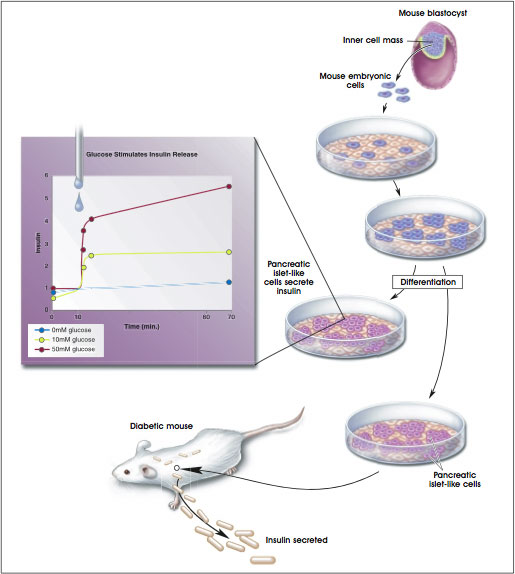 Development of Insulin-Secreting Pancreatic-Like Cells From Mouse Embryonic Stem Cells