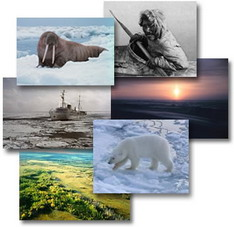 Arctic images collage
