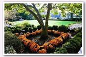 Link to White House Gardens – Fall Photos