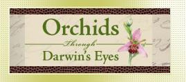 Orchids Through Darwin's Eyes