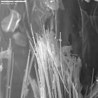 Scanning electron micrograph of asbestiform amphibole