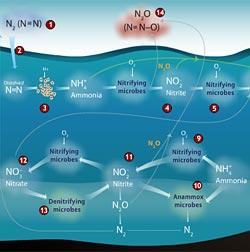 Tracking Nitrogen's Elusive Trail in the Ocean