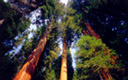 Wood Products: Sawmills eTool