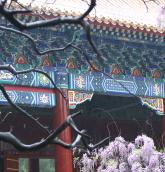 Beijing floral scene