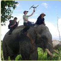 tracking elephants