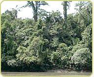 riverine jungle