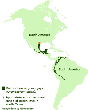 Distribution of green jays in North and South America.