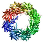 Folding Proteins. The lid of this barrel-shaped molecule opens and closes to control how proteins fold into the unique shapes that determine their function. Image courtesy of Judith Frydman.