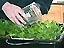Picture of a hand pouring water from a glass container into a tray of plants
