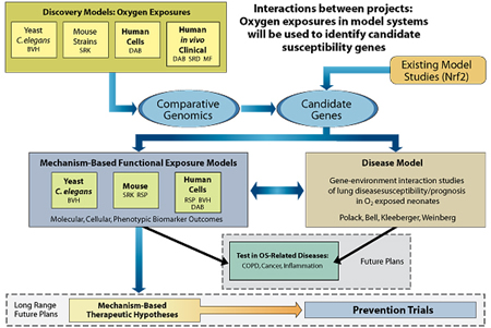 Discovery Models: Oxygen Exposures (Yeast/C. elegans, Mouse strains, Human cells, Human in vivo/Clinical) heads to Comparative Genomics. Both Comparative Genomics and Existing Model Studies head to Candidate Genes. Candidate Genes leads to two sections: Mechanism-Based Functional Exposure Models (Yeast/C. elegans, Mouse, Human cells) and Disease Model (Gene-environment interaction studies of lung disease, susceptibility/prognosis in O2-exposed neonates). The double arrow indicates that the two sections are interconnected. Mechanism-Based Functional Exposure Models and Disease Model lead to Test in OS-Related Diseases, which will occur in the future. Mechanism-Based Functional Exposure Models also leads to Mechanism-Based Therapeutic Hypotheses, which in turn, leads to Prevention Trial. The latter two indicate long-range future plans.