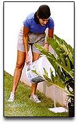 Elimine las aguas estancadas alrededor de su casa