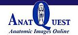 AnatQuest