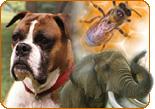 Science Photos: Animals