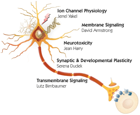 Brain illustration showing interaction between circuits, functions, cells and genes.