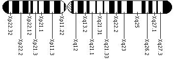 Ideogram of the X chromosome