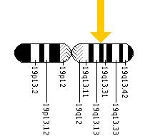 The APOE gene is located on the long (q) arm of chromosome 19 at position 13.2.