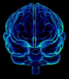 Blueprint for a brain