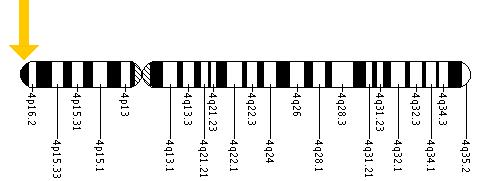 The LETM1 gene is located on the short (p) arm of chromosome 4 at position 16.3.