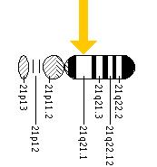 The APP gene is located on the long (q) arm of chromosome 21 at position 21.