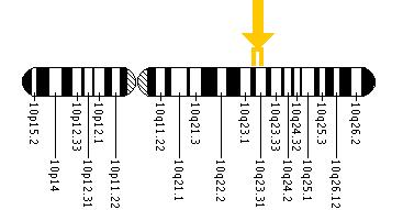 The LIPA gene is located on the long (q) arm of chromosome 10 between positions 23.2 and 23.3.