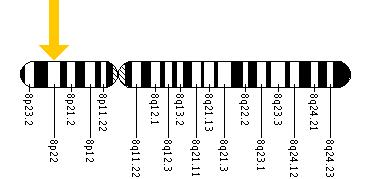 The LPL gene is located on the short (p) arm of chromosome 8 at position 22.