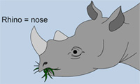 A picture of a Rhino.