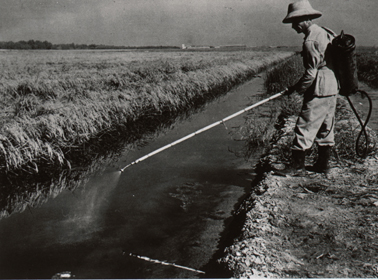 Mosquito eradication spraying in a ditch, Brazil