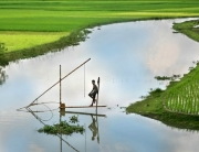 Bangladesh_Fishing_2006
