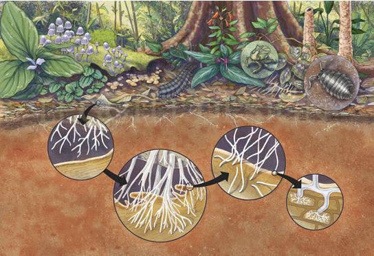 Peruvian Rainforest Floor by Marjorie Leggitt for the Denver Botanic Gardens