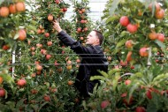 How Putin Lowered the Price of Europe's Apples