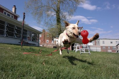 Trainers tend to notice early on that certain dogs have natural talents that make them better suited for specific kinds of work.